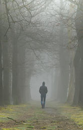 man walking in wood path