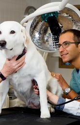 image of dog being inspected by vet students